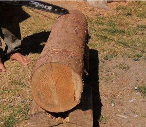 výber stromu